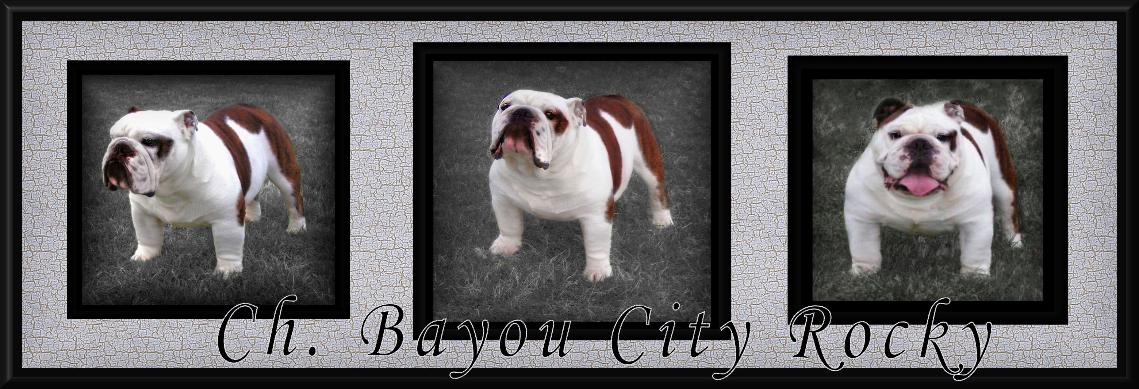 Champion Bayou City Rocky Champion english bulldog stud service