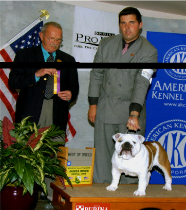 Show win pictures of bulldog Ch.steelebull Catch Me if u can