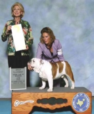 Yoda group 3rd Champion bulldog stud